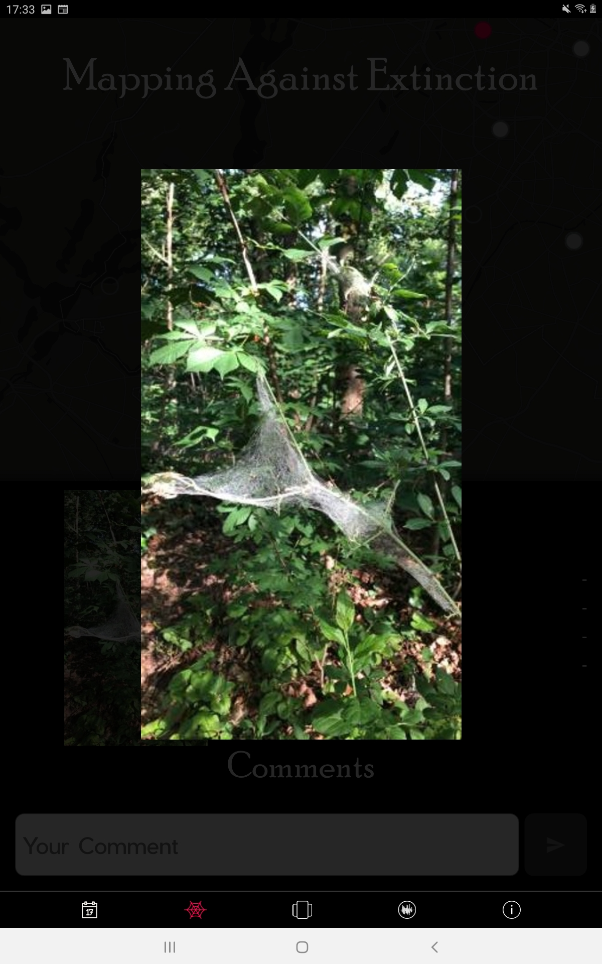 How to hear the universe in a spider/web: A live concert for/by invertebrate rights